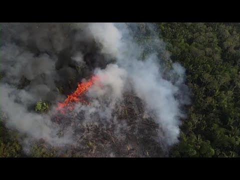 Amazon fires surge anew in Brazil as cleared forest burns [Video]