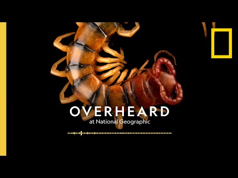 Saving the Creepy Crawlies Release    Podcast   Overheard at National Geographic [Video]