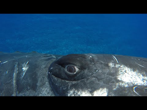 A whale saved my life   Close Encounters   BBC Earth [Video]