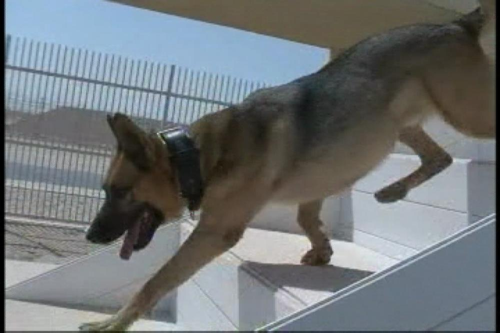 DVIDS – Video – Air Force Report: Dogs of the Desert [Video]