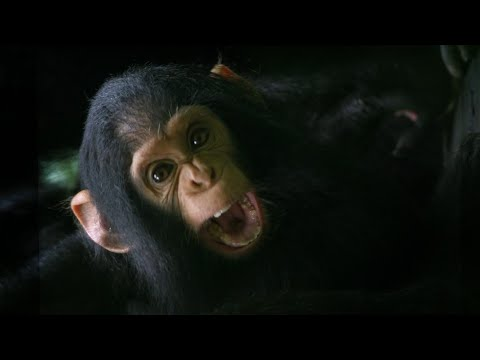 The Doctor Who Can Communicate With Chimps | Game Changers [Video]