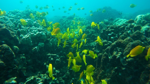 A surprising bit of good news about coral reefs and climate change [Video]