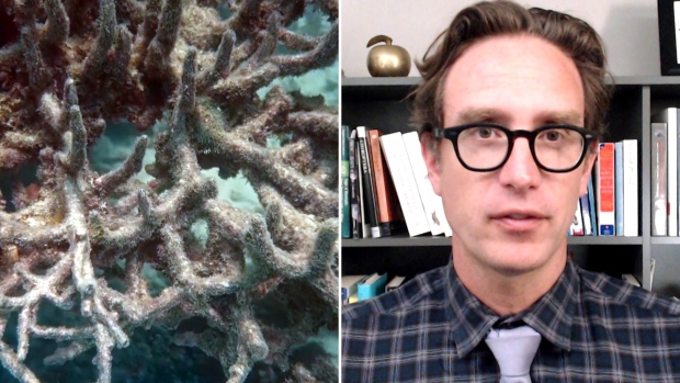Dan Riskin on a glimmer of hope for coral reefs [Video]