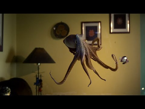 Octopus In The Living Room   Octopus In My House   BBC Earth [Video]