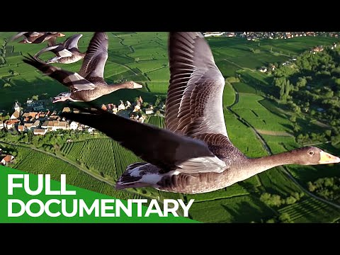 Birds of Passage – A Secret Journey Through the Skies | Free Documentary Nature [Video]