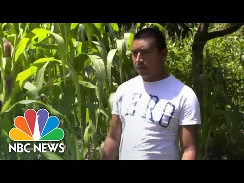 Guatemalan Farmers Say Climate Change Forcing Them To Migrate To US [Video]
