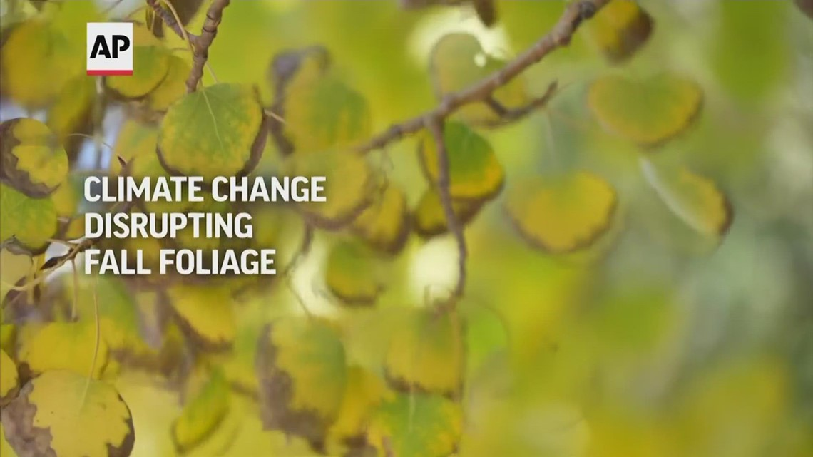 How climate change is disrupting fall foliage [Video]