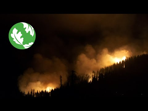 Our Planet's Determining Decade [Video]