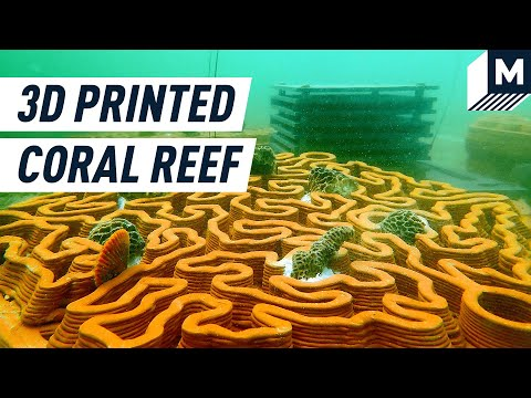 Coral reefs in Hong Kong are dying. These 3d printed tiles could bring them back to life. | Mashable [Video]
