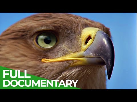 Hunters of the Sky – Europe's Birds of Prey   Free Documentary Nature [Video]