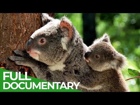 The Cutest | Wild Ones | Episode 4 | Free Documentary Nature [Video]