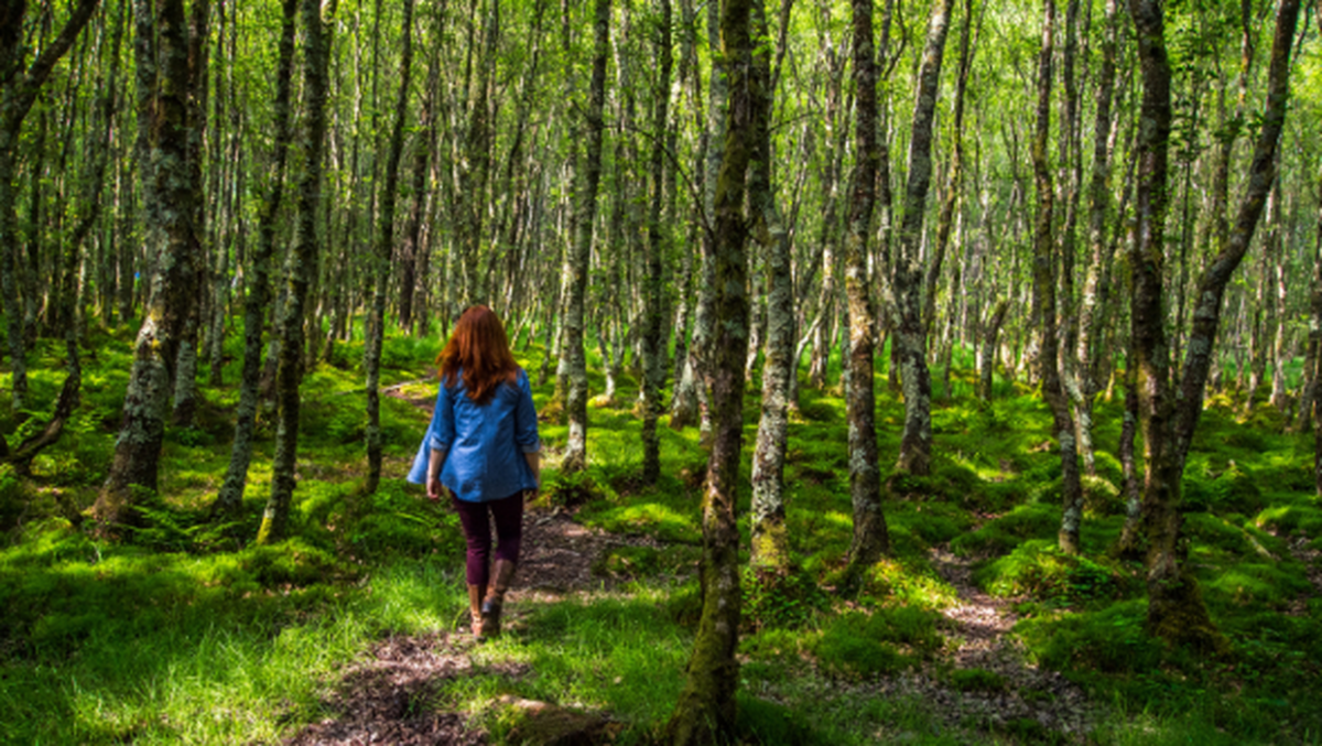 As Ireland's forests reach crisis point, The Nature Trust offers a glimmer of hope [Video]